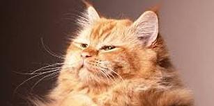 Tontişlikte Sınır Tanımayan Kediler