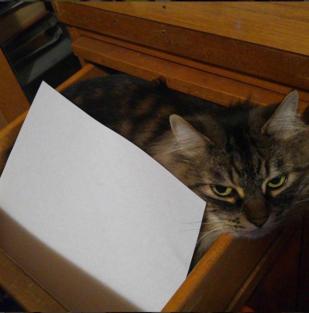 Kedilerini bu işe alet edenler de vardı.