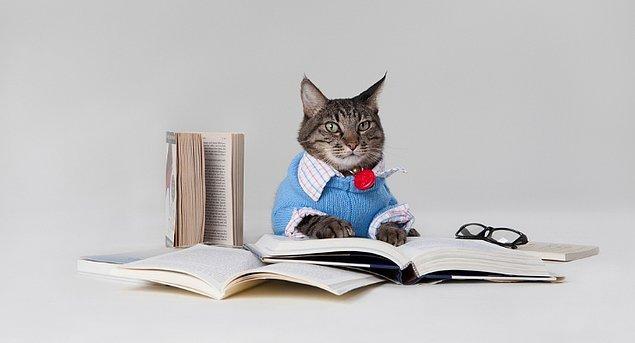 Edebiyat Profesörü olabilirsin!
