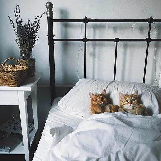 9. Tabii ki insanları Anya'nın yatağında uyuyorlar...