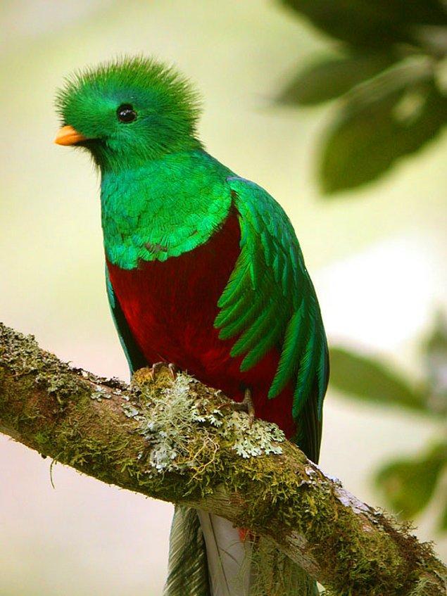 6. Quetzal