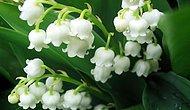 Çiçek Kokulu En Güzel 15 Parfüm