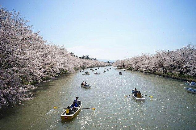 5. Japonya Kiraz Çiçeği Festivali