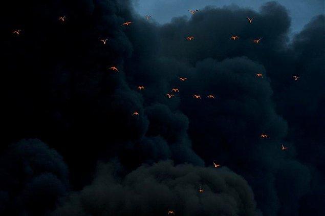 5. Son derece etkili bir yangından ve dumanından kaçan, ateşin o kavurucu rengi üzerilerine yansıyan kuşlar.
