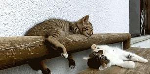 Hayvanlar Aleminden Hızını Arttırarak Tatlılığını Coşturabileceğiniz 12 Gif