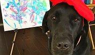 Ressam Köpek Dog Vinci ile Tanışın !!
