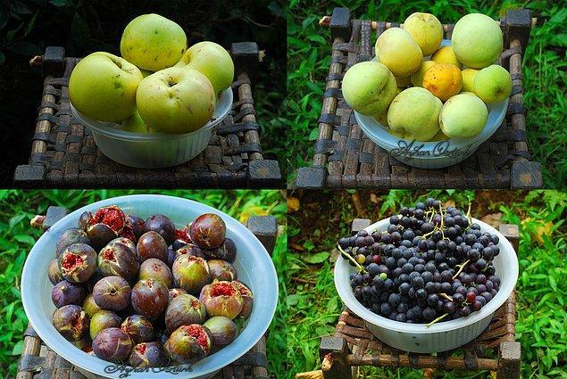 4. Dalından koparıp tadına bakabileceğiniz doğal meyveler.