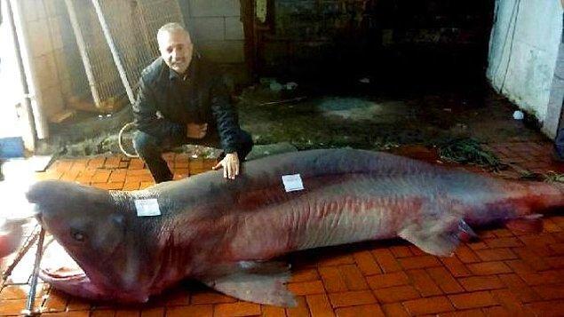 2. Balıkçıların ağına takılan köpek balığı görenleri hayrete düşürdü