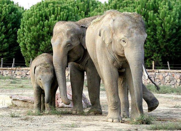 4. Darıca Hayvanat Bahçesi'nin bu günlerde sevimli bir konuğu var