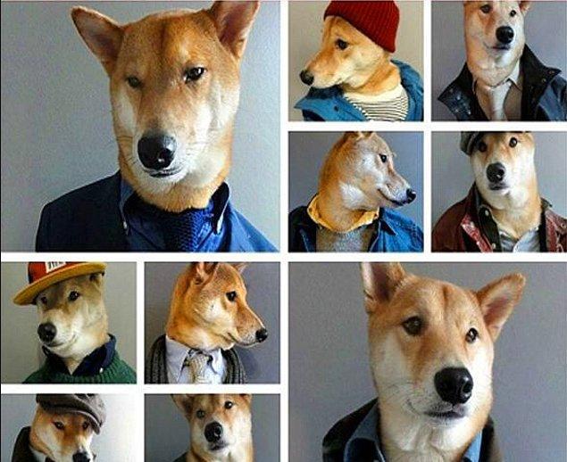 2. Shiba Inu cinsi bir köpek olan Bodhi, Instagram'da modellik yaparak yılda 180,000 dolar kazanıyor.