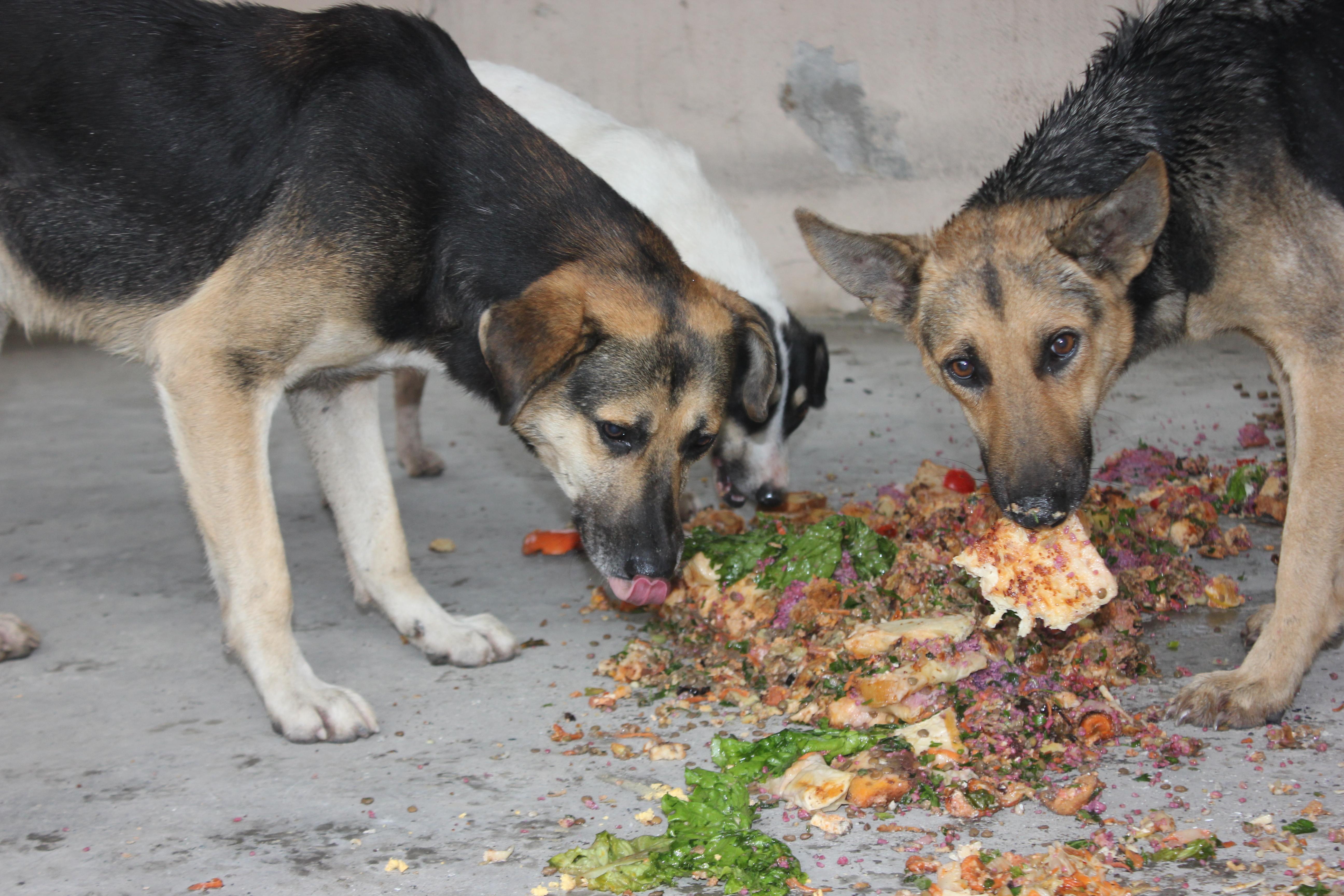 Evcil hayvanlar için doğru gıda nasıl seçilir
