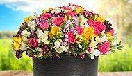 Bahar Çiçekleri Hem Sevdiklerinize Hem Size Baharı Buram Buram Yaşatacak!