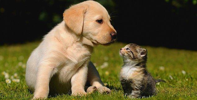 7. Kediciler - Köpekçiler
