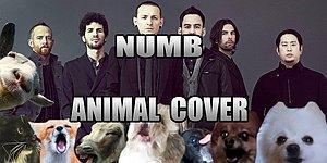 Linkin Park'tan Skrillex'e Farklı Tarzlardaki Şarkıları Söyleyen Hayvanların 10 Efsane Videosu