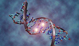 DNA Hakkında Muhtemelen Daha Önce Duymadığınız 13 Muhteşem Bilgi