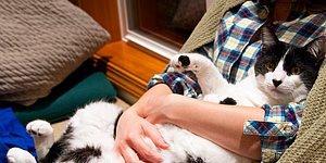 Yalnızca İnsanlarla Ev Arkadaşı Olan Kedilerin Muzdarip Olduğu 23 Problem