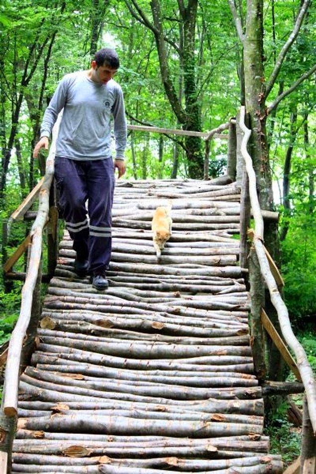 Tesis birçok bungalov kedi evinden oluşuyor. Ayrıca kediler için özel köprüler ve yürüyüş yolları da mevcut.