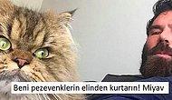 20 Madde İle Adnan Hoca'nın Kedilerine Rakip Dan Bilzerian'ın Kader Mahkumu Kedileri!