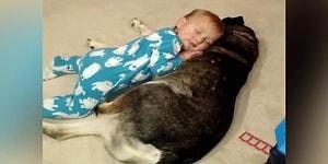 Uyuyan Bebek İçin Son Derece Konforlu Bir Yatak Olan Vefakar Köpek