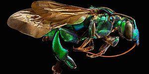 Mikro Fotoğrafçılığın Dibi: 10.000 Kareden Oluşan Büyüleyici Böcek Fotoğrafları