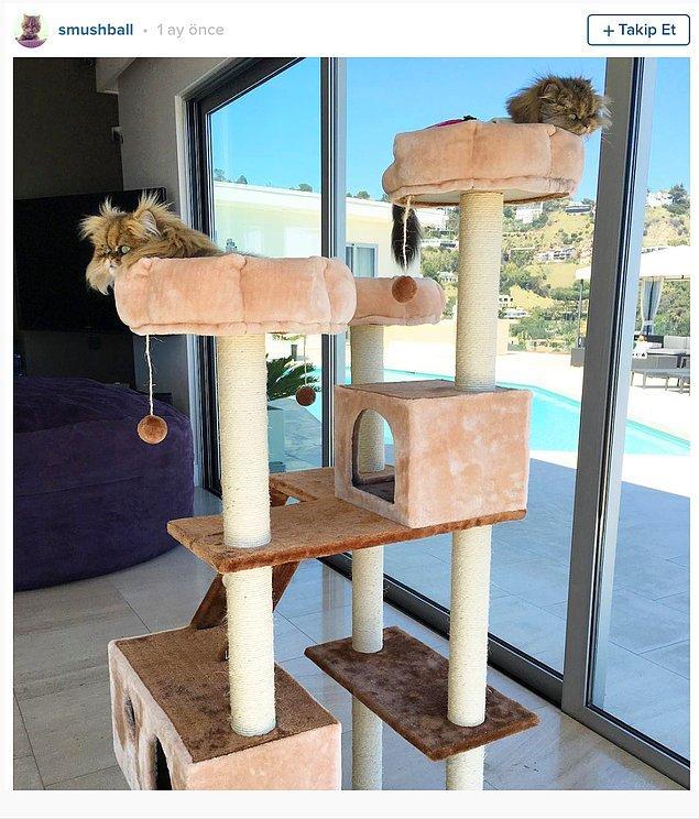 Instagram'da 850,000 takipiçisi olan kediciği Smushball da iyi, çok katlı apartmanında takılmaya devam ediyor.
