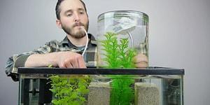 Akvaryumunuzdaki Balıklarınıza Yüzebilecekleri Ekstra Alan Yaratmak İster misiniz?