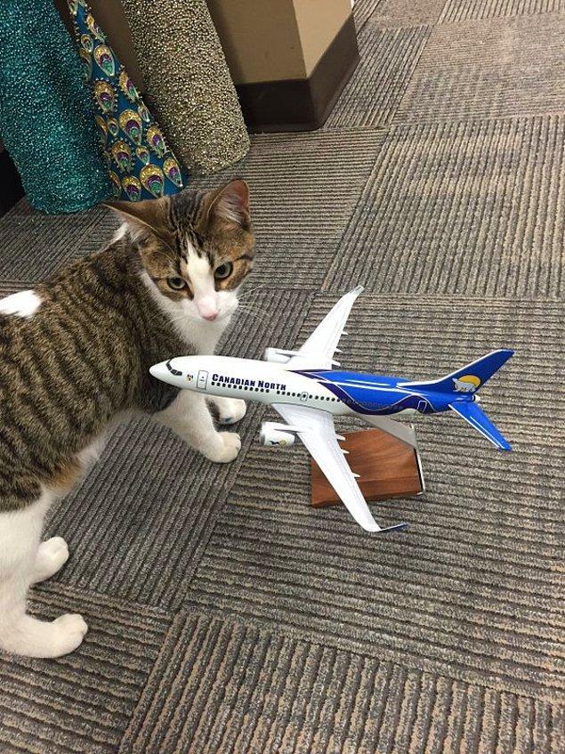 Evcil hayvan sahiplerine bu zor durumda yardımcı olabilmek için iki ayrı havayolu şirketi harika bir fedakarlık yaptı.
