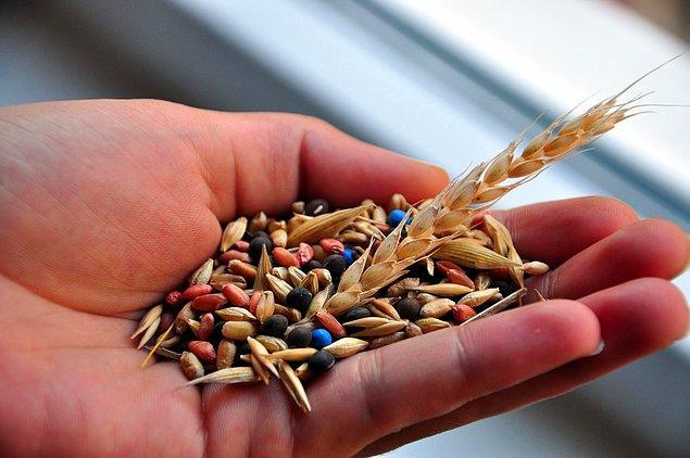 6- Yerel ve yerli tohumlardan vazgeçilerek 'hibrit tohumlar'ın teşvik edilmesi, bu tohumların aşırı su istemesi nedeniyle topraklarda meydana gelen tuzlanma.