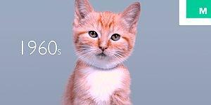 Усы-лапы-хвост: как менялись кошки на протяжении последних 100 лет