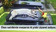 Adeta Hepsi Birer Hachiko: Sahipleri Öldüğünde Bile Başından Ayrılmayan 16 Vefakar Köpek
