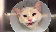 Geçirdiği Korkunç Kaza Sonucu Hayata Sıcak Gülümsemesiyle Bakan Kedi