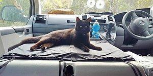"""""""Я уволился с работы, чтобы поехать путешествовать по Австралии с кошкой"""""""