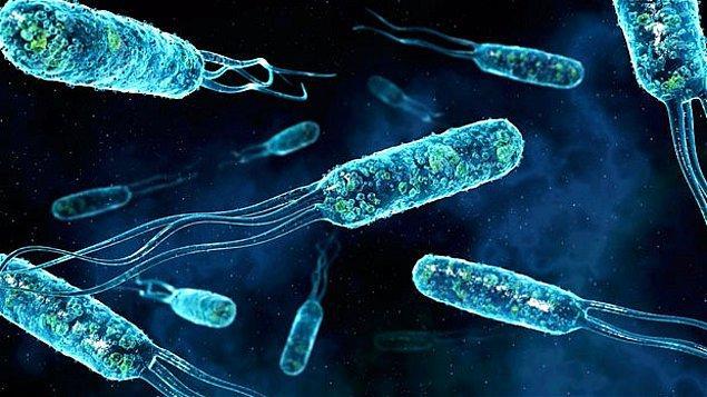 4. Yaşadığınız sürece vücudunuzda bulunarak organizmanıza arkadaşlık eden bakteriler, öldüğünüzde size tamamen düşman olacaklar.