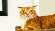 Kedileri Anlama Rehberi: Hangi Duygularda Nasıl Tepki Veriyoruz?