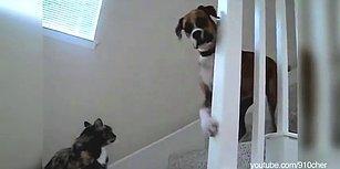 Kapı Bekçisi Kediler ve Onların Gazabına Uğrayan Zavallı Köpekler