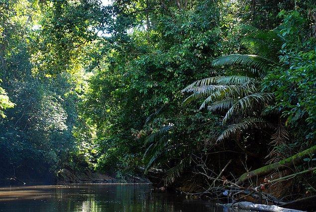 Yağmur ormanları estetik anlayışımıza olduğu kadar hayatta kalma mücadelemize de büyük katkılar yapıyor.