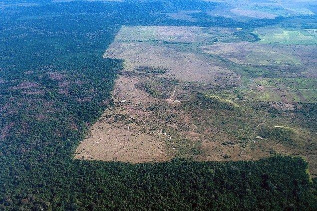 Fakat orman yok olma seviyesi son yıllarda yapılan yoğun çalışmalarla azaldı ve tekrardan ümit verici bir seviyeye geldi.