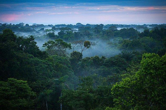 Brezilya bununla yetinmeyip çalışmalarına tam gaz devam etmeyi ve orman yok olma akışını 2030'da tamamen durdurmayı planlıyor.