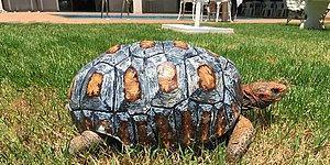 İşte Bu! Kabuğu Yanmış Kaplumbağayı Evine Yeniden Kavuşturan Koca Yürekli İnsanlar