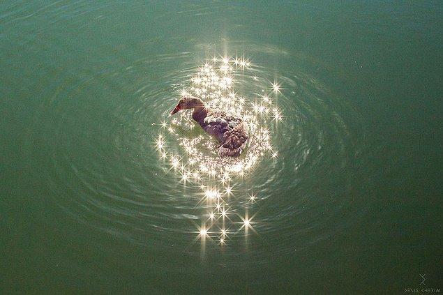#1 Işıl ışıl bir ördek
