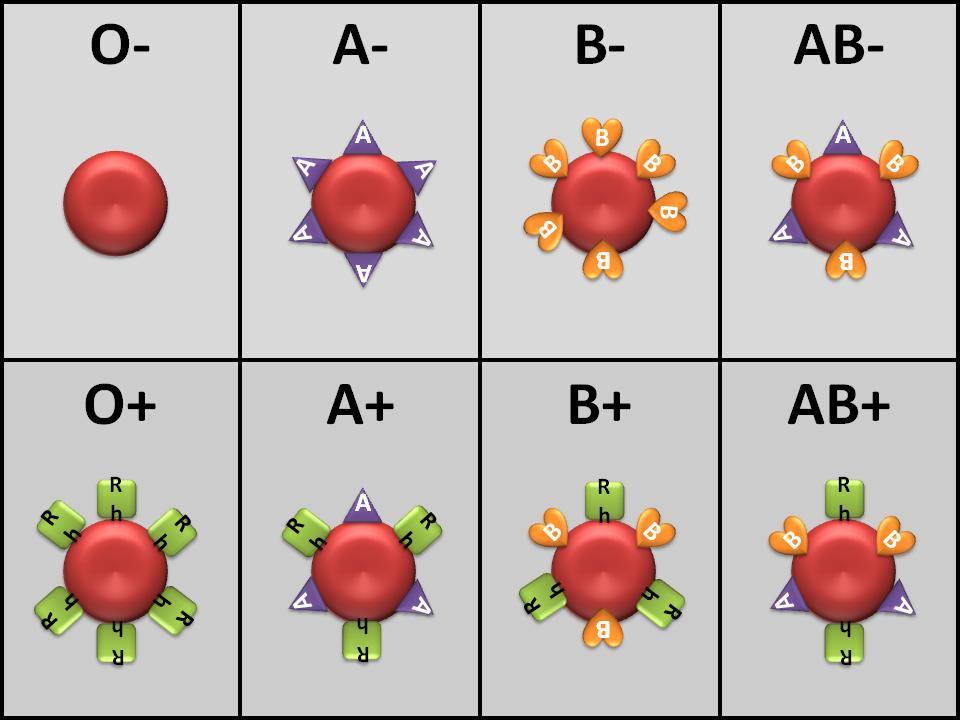 İlk negatif kan grubu: özellikleri ve hamilelik üzerindeki etkisi