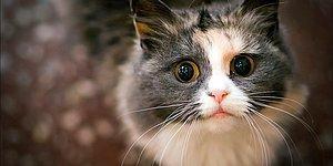 Araştırmaya Göre 'Hayvanlara Kötü Davrananlar Potansiyel Suçlu'