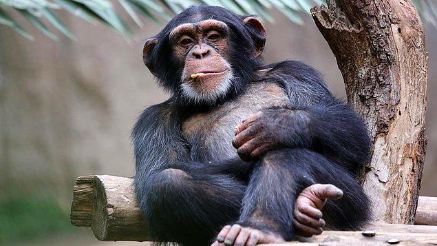 7. Şempanzelerle yaklaşık aynı sayıda kılı vücudumuzda barındırmaktayız.
