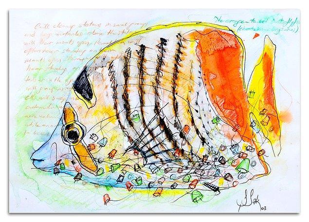 "8. ""Orange Tailed Butterflyfish"""
