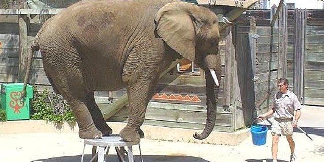 """Birkaç turistin gülmesi, birkaç çocuğun """"fil görmüş"""" olması için hayvanlara gösterdiğimiz bu yasal muamele hangi vicdana, hangi etiğe, hangi ahlaka sığar?!"""