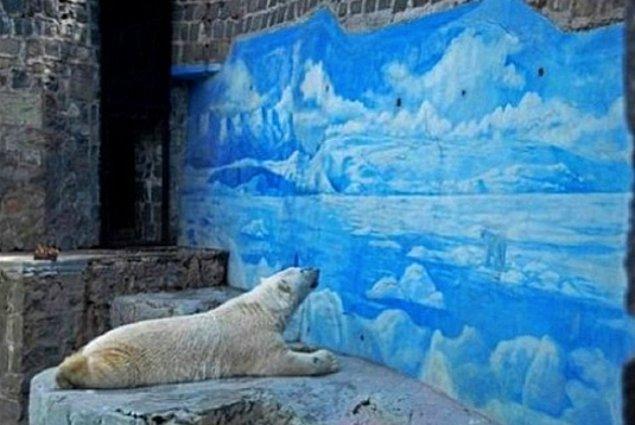 Adı üzerinde, kutuplarda yaşayan bir kutup ayısının sıcak iklimli bir ülkenin hayvanat bahçesinde işi ne?!