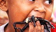 Tarantulalar Hakkında Muhtemelen İlk Kez Duyacağınız 13 Enteresan Bilgi