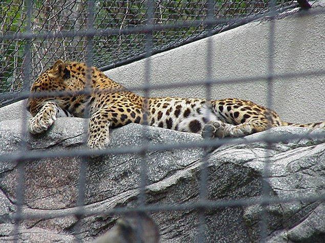 Bunlar aslında oldukça sıradan olaylar; genelde hayvanat bahçelerinden gelen haberler sadece bu yönde oluyor.