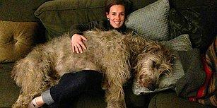Ne Kadar Büyüdüğünün Farkında Olmadan Hayatına Fütursuzca Devam Eden 25 Köpek