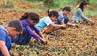 '1 Milyon Çocuk İşçi Görmezden Geliniyor'